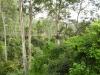 Hängebrücken-Weg im Kakum Nationalpark