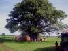 In Ghanas Savannenlandschaft