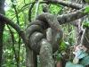 Bobiri Rainforest Reserve