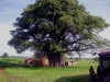 Ghana's northern savannah