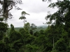 Rainforest panorama