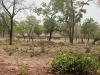 Bauernsiedlung im Norden Ghanas